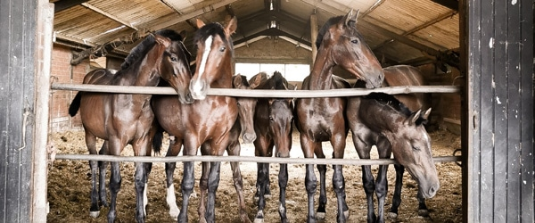 Several horses standing in a stable